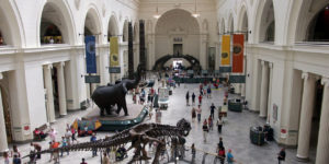 The Field Museum – Chicago